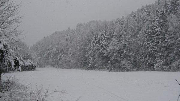 よく雪が降りました。